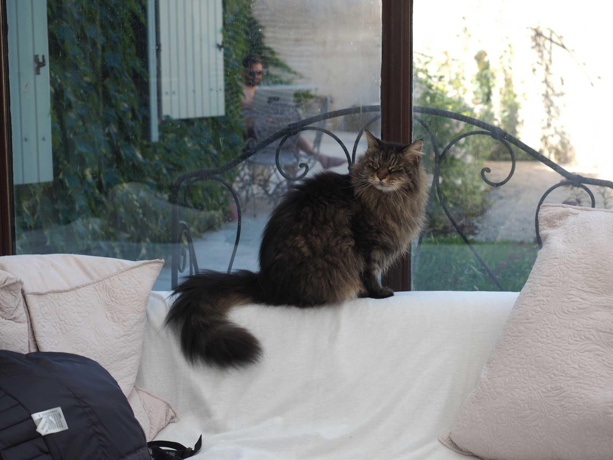 Brontë - Le chat de la maison